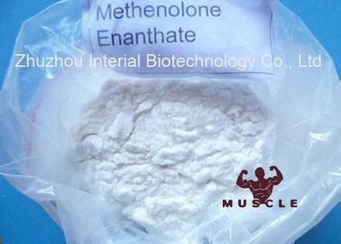China 99% minimales Methenolone Enanthate Primobolan Depot-legale Muskel-Steroide CAS 303-42-4 distributeur